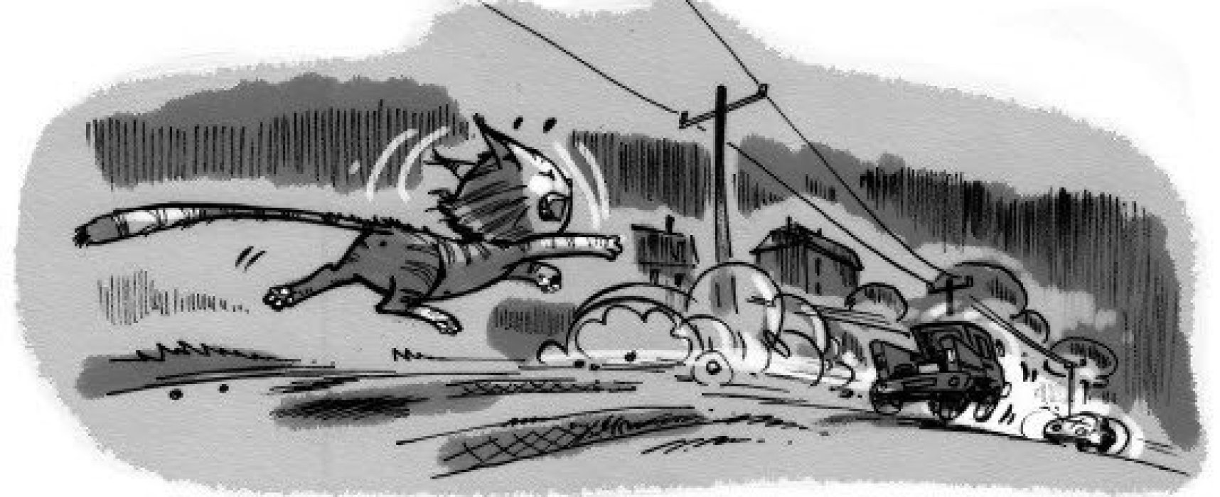 Damdaki Kedi ve Huysuz Uğurböceği