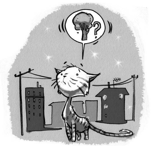 damdaki kedi 2